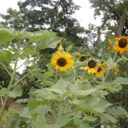 GardenShed Project – June 2015