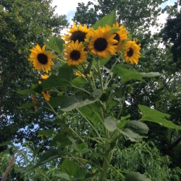 Cottage City Garden Work Session: Saturday, July 25