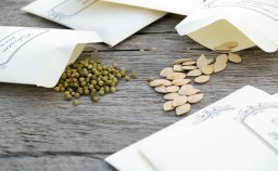Seed Saving Workshop with Chef Mark Haskell