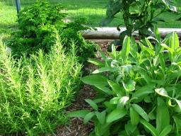 Herbal Gardening Workshop