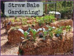 June Garden News