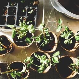 Workshop: Sustainable Gardening for Water Preservation