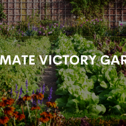 Cottage City Garden is a Climate Victory Garden