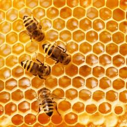 Honeybees in the Garden